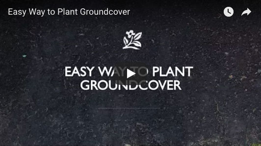 Easy Way to Plant Groundcover